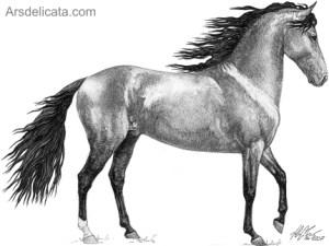 Dibujos a lapiz de caballos (10)
