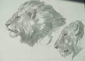 Dibujos a lápiz de leones (4)