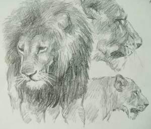 Dibujos a lápiz de leones (5)