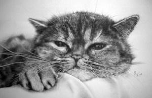 Dibujos a lapiz de gatos (11)