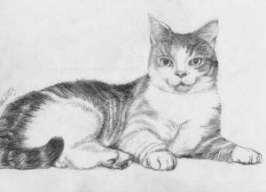 Dibujos a lapiz de gatos (14)