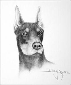 Dibujos de animales a lápiz (7)