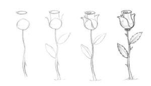 Dibujos a lápiz de flores (3)