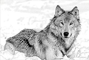 10 Hermosos dibujos a lápiz de animales (6)