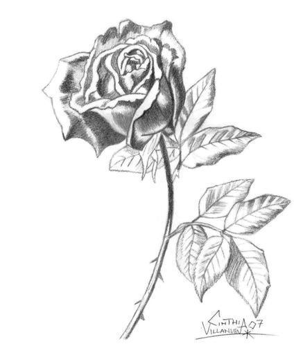 11 Hermosos dibujos a lápiz de rosas - Dibujos a lapiz