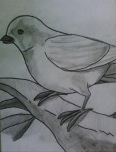 11 Nuevos dibujos a lápiz para principiantes (8)
