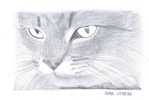 9 Bonitos dibujos a lápiz gatos (4)