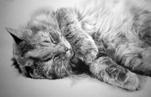 9 Bonitos dibujos a lápiz gatos (5)
