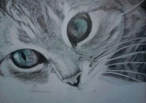 9 Bonitos dibujos a lápiz gatos (7)