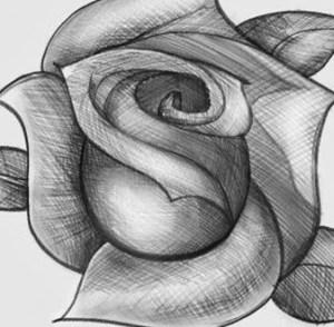 11 Nuevos dibujos a lápiz de rosas (11)