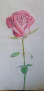 10 dibujos a lápiz de rosas para tatuajes (2)