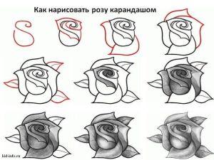 10 dibujos a lápiz de rosas para tatuajes (7)