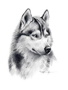 10 nuevos dibujos a lápiz de animales (4)