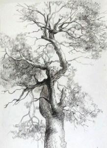 11 Nuevos dibujos a lápiz de árboles (10)