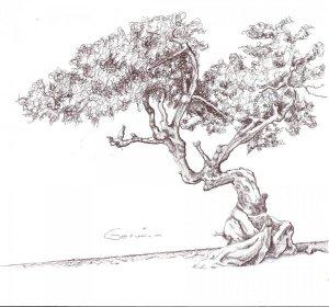 11 Nuevos dibujos a lápiz de árboles (3)