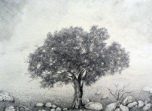 11 Nuevos dibujos a lápiz de árboles (7)