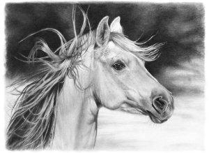 11 dibujos a lápiz de caballos (8)