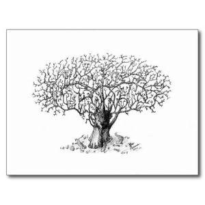 11 dibujos a lapiz de árboles (2)