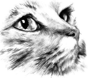 10 dibujos a lápiz de gatos (7)
