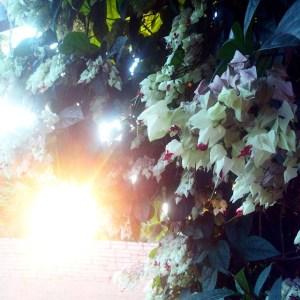Sol flor muro