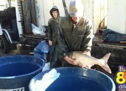 Feira do Peixe Vivo ocorre neste sábado em Bento