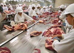 JBS retoma produção de carne bovina
