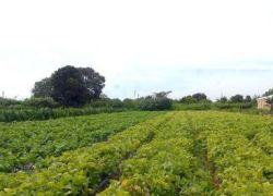 Produtor rural é condenado por estelionato em Caxias do Sul