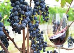 Lote com preços promocionais para o III Simpósio Internacional Vinho e Saúde encerram neste sábado