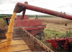 Troca-troca de sementes de milho está com as inscrições abertas em Bento