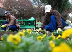 Parceria disponibiliza área para plantação de mudas nativas em Bento