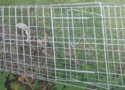 Homem registra ocorrência de maus tratos de animais no Barracão em Bento
