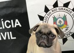 Cão furtado é recuperado pela Polícia Civil em Igrejinha