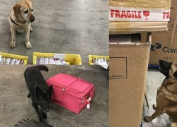 Operações da Receita com cães resultam em diversas apreensões de drogas no início de 2018