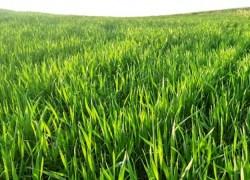 Clima favorece implantação das culturas de inverno no Rio Grande do Sul