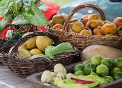Semana do Meio Ambiente e do Alimento Orgânico discute segurança ambiental e nutricional na UCS