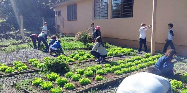 Alunos da escola Roman Ross, em Monte Belo do Sul, cultivam horta orgânica em parceria com o projeto Tribos. Divulgação Prefeitura de Monte Belo do Sul