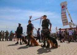 Operação Golfinho reforça policiamento ostensivo das praias e balneários