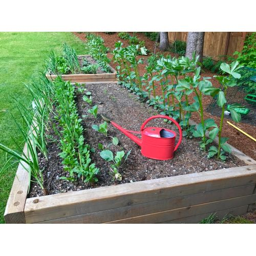Medium Crop Of Backyard Gardening Blog
