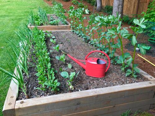 Medium Of Backyard Gardening Blog