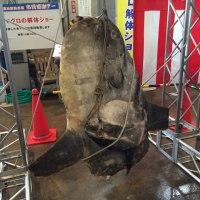 report-131109-nagahama-sengyo-market29