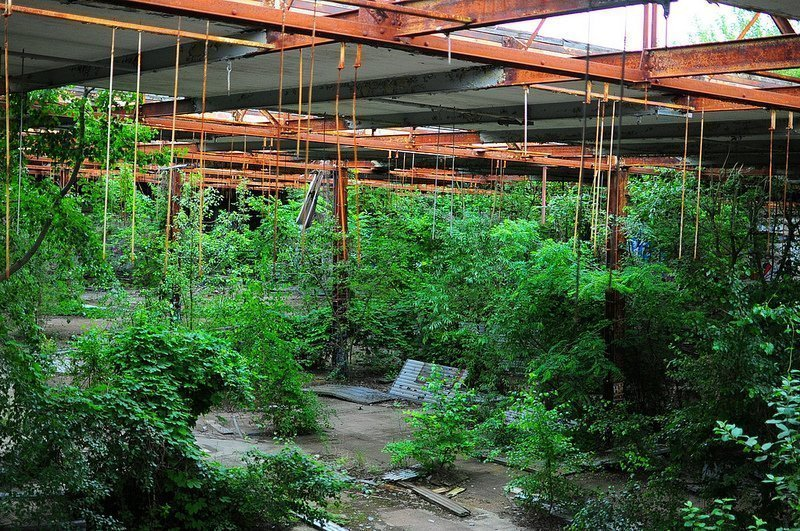 forest in an abandoned factory koepenick berlin