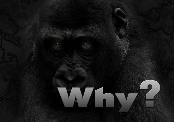 why-234596_1280