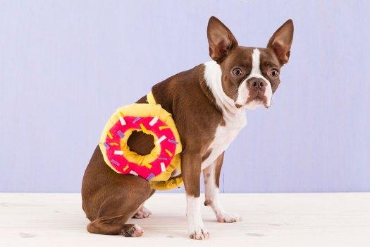 Dog Donut