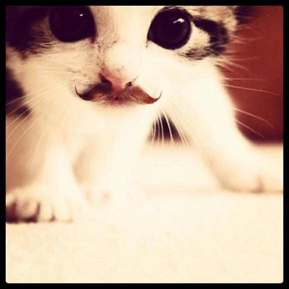 cat-with-mustache-animals-with-mustache.