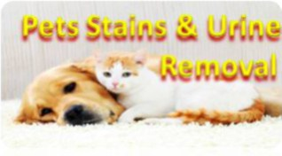 Cheap Pets Urine and Stains Removal