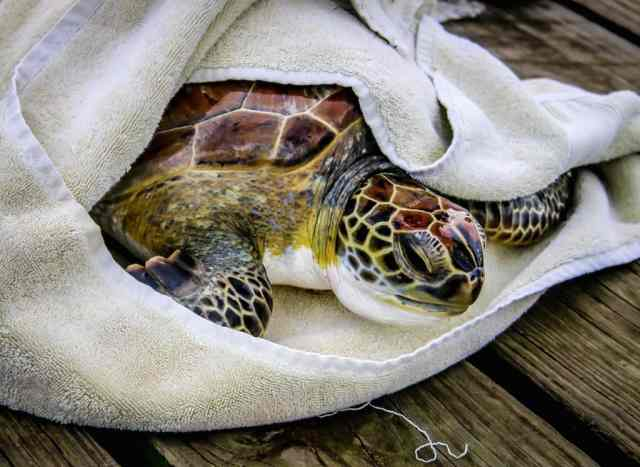 volunteering with costa rica sea turtles