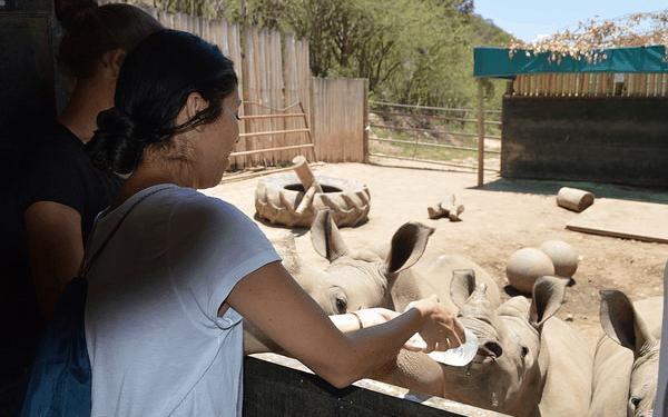 feed rhino baby