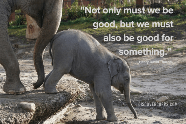 Quotes About Volunteering -Not only must we be good, but we must also be good for something.-