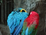 Lovebirds in Denver CO zoo taken with Sony Cybershot DSC-HX20V, the best compact camera for travel photography
