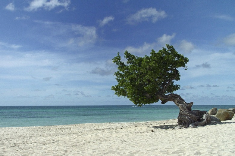 Divi Trees in Aruba, Eagle Beach. Photo Credit.